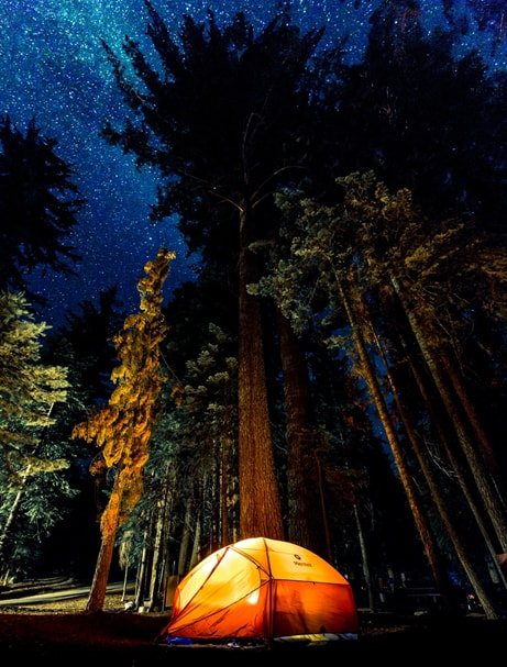 well-lighted tent in the middle of the night on a forest